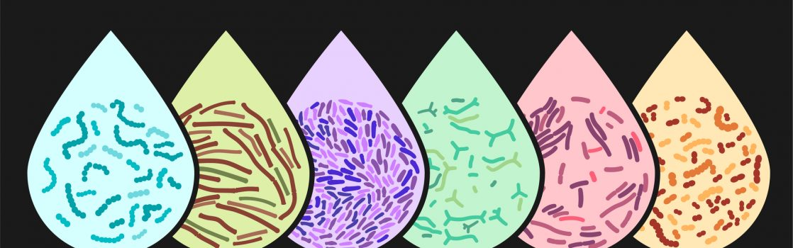 bifido bacteriën